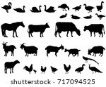 Stock vector collection of silhouettes of domestic animals farm animals 717094525