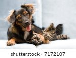 Stock photo puppy and kitten 7172107
