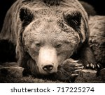 European Brown Bear In A Fores...