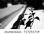 the black and white of plant  | Shutterstock . vector #717251719