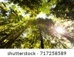 dense rainforest. nature... | Shutterstock . vector #717258589