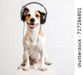 dog in headphones listening to... | Shutterstock . vector #717286801