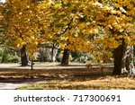 Landscape With Autumn Chestnut...