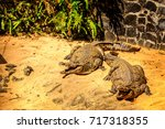 nile crocodile with mouth open... | Shutterstock . vector #717318355