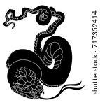 japanese snake tattoo style... | Shutterstock .eps vector #717352414