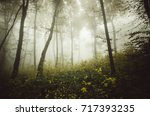 forest landscape with colorful... | Shutterstock . vector #717393235