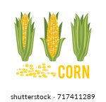 corn with green leaves.... | Shutterstock .eps vector #717411289