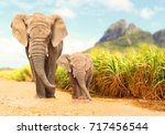 Stock photo african bush elephants loxodonta africana family walking on the road in wildlife reserve 717456544