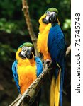 Parrots  Blue And Yellow Macaw...