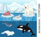 cartoon wild arctic animal on... | Shutterstock .eps vector #717471484