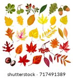 autumn oak  maple  rowan leaf... | Shutterstock .eps vector #717491389