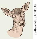 portrait of a roe deer | Shutterstock .eps vector #717505135