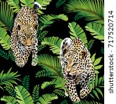 leopards palm leaves tropical... | Shutterstock .eps vector #717520714