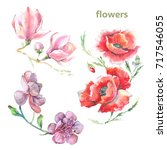 watercolor flowers on white... | Shutterstock . vector #717546055