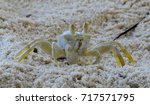 small crab on the sand. fauna... | Shutterstock . vector #717571795