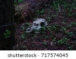 Skull In The Dark Woods