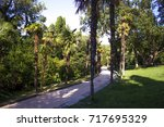 photo of palm avenue | Shutterstock . vector #717695329