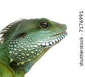 bearded dragon in front of a...   Shutterstock . vector #7176991