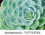 green cactus  | Shutterstock . vector #717713701