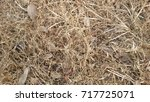 dry leaf background | Shutterstock . vector #717725071