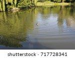 Image Of Two Mallard Ducks...