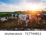 cows on dairy farm | Shutterstock . vector #717744811
