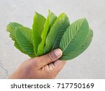 hand of asian workers is... | Shutterstock . vector #717750169