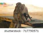 two sitting quiet monkeys... | Shutterstock . vector #717750571