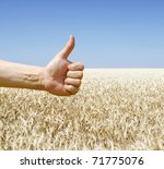 hand show ok over wheat field - stock photo