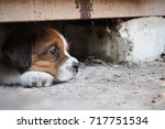 Stock photo cute puppies siting 717751534