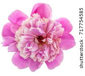pink peony flower isolated on... | Shutterstock . vector #717754585