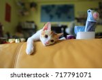 lazy small cat on the sofa | Shutterstock . vector #717791071