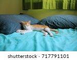 comfortable sleeping cat | Shutterstock . vector #717791101