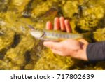 trout fishing in a mountain... | Shutterstock . vector #717802639
