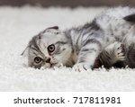 tabby kitten looks | Shutterstock . vector #717811981