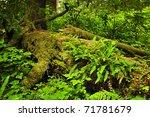 Lush Foliage On Fallen Tree In...