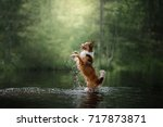 Dog Border Collie In The Water...