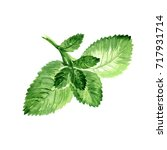 watercolor mint leaves. hand... | Shutterstock . vector #717931714