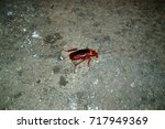 filthy insect cockroach closeup ... | Shutterstock . vector #717949369