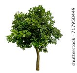 green tree isolate on white