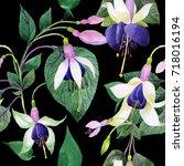 wildflower fuchsia flower... | Shutterstock . vector #718016194
