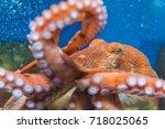 octopus in the aquarium... | Shutterstock . vector #718025065