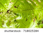 Small photo of Center or heart of fresh fern bush with young curly fiddle head. Natural background. Summer green forest. Plants pattern. Blurred edges, soft focus. Top view