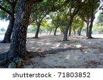 Park trees - stock photo