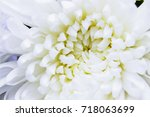 close up top view of white...   Shutterstock . vector #718063699