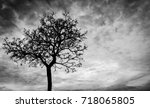 Small photo of Silhouette dead tree on dark dramatic sky background for scary or death