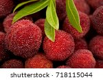 red bayberry | Shutterstock . vector #718115044