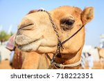 portrait shot of a camel at... | Shutterstock . vector #718222351