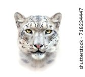 Snow Leopard Face On White...