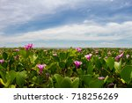 morning glory flowers and...   Shutterstock . vector #718256269